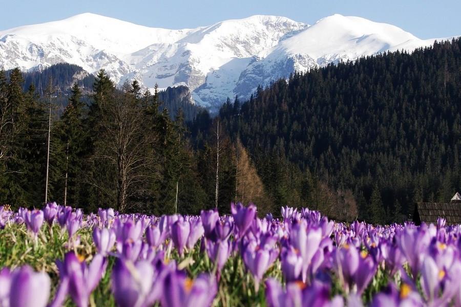 Wiosenna wyprawa w Tatry